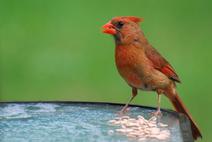 Bird-feeding Basics   Get Into Birds   Personal   Scoop.it