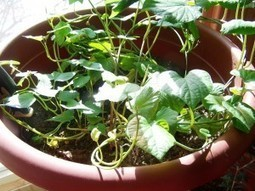 Gardening Jones » Dear Journal- Early March 2013 | Annie Haven | Haven Brand | Scoop.it