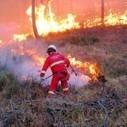 Terni, prevenzione incendi tagliando vegetazione e bruciandola in centrali a biomasse, no del M5S | Rassegna Stampa - M5S Terni | Scoop.it