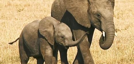 Jonathan Moyo investigated over elephant sale? | Pachyderm Magazine | Scoop.it
