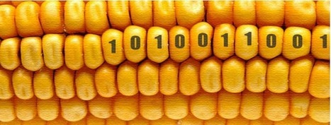 dow chemical seeks usda approval for 2,4-d ready corn | Sustain Our Earth | Scoop.it