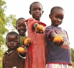 State of Food Insecurity in Africa shows progress in halving the proportion and the number of hungry people by 2015 | Food Security | Scoop.it
