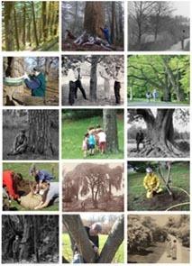 Arnold Arboretum » Image Collection | Garden Libraries | Scoop.it