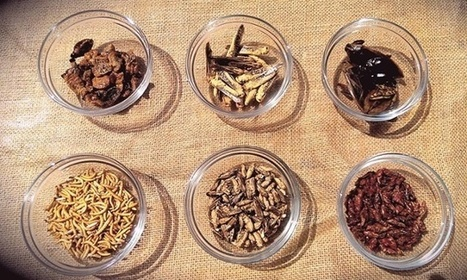 Why Meat Free Week won't work | Entomophagy: Edible Insects and the Future of Food | Scoop.it