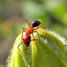 Actualité > L'exceptionnel odorat des fourmis étonne les scientifiques | Nature insolite | Scoop.it