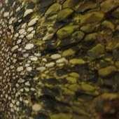Wonderful Things: The Hidden Beauty of the Horse Dung Fungus | The Artful Amoeba, Scientific American Blog Network | Botany teaching & cetera | Scoop.it