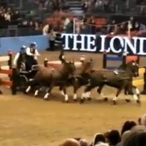 Extreme Carriage Driving at Olympia - Eventing Nation | Horses | Scoop.it