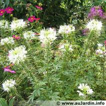 Il est venu le temps des semis des fleurs annuelles | Côté Jardin | Scoop.it