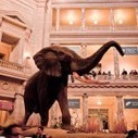 The Elephant in the Sustainability Program | CleanTechies Blog - CleanTechies.com | Sustainable Futures | Scoop.it