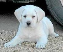 Free Dogs and Puppies in Cullman,Alabama   Free Dogs and Puppies   TechKev   Scoop.it