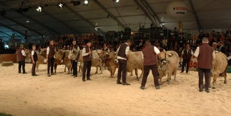 La race aubrac brille au Sommet de l'élevage | L'info tourisme en Aveyron | Scoop.it