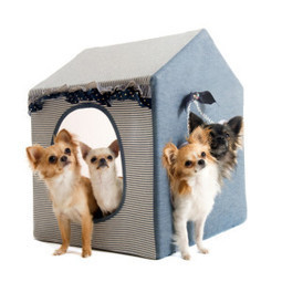 Pet accessory shop located in Brooklyn NY | A1 pet grooming in Brooklyn NY by Paws N Claws Grooming & Access | Scoop.it