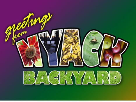 Nyack Backyard: Gardening With Kids: Ten Things That Work | School Gardening Resources | Scoop.it
