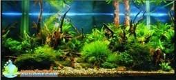 Dekorasi Aquarium Dinding | Akvodecor | Aquarium Laut | Aquarium Tawar | Dekorasi Aquarium | Aquarium | Scoop.it