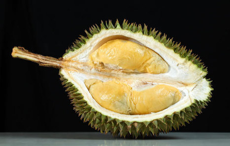 Durians: 8 Myths and Facts About the King of Fruits | Unique Malaysian Fruits | Scoop.it