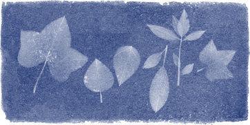 Anna Atkins: Google Doodle artfully celebrates a true-blue photographic pioneer | Photography - Fuji X, Nikon, Leica, technique | Scoop.it