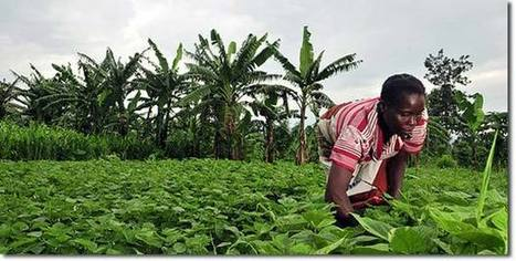 UN: Only Small Farmers and Agroecology Can Feed the World | Permaculture Design | Scoop.it