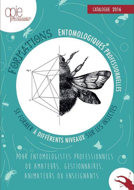 Se former sur les insectes : 16 stages au catalogue 2016 de l'Opie | Mon Scoop.it du week-end | Scoop.it