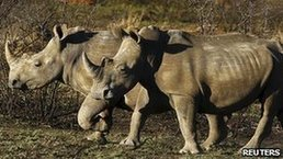 Record number of SA rhinos killed | The Wild Planet | Scoop.it