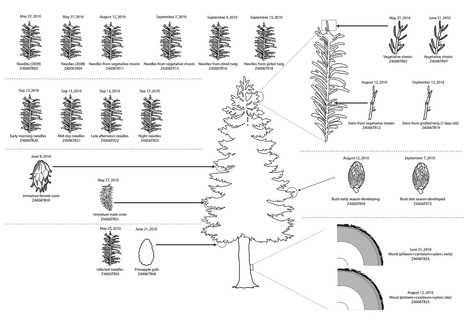 Serendipitous Meta-Transcriptomics: The Fungal Community of Norway Spruce ( Picea abies ) | Plant Genomics | Scoop.it