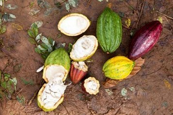 "How do we get enough certified cocoa by 2020? Change the definition of ""certified"" - Candy Industry (blog) 