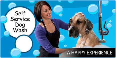 Pamper Your Loving Pet with A Self Serve Dog Wash | Good Dog and Pet Washing Service | Scoop.it