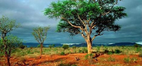 Ranger shot in Kruger National Park - The Durban Online | Kruger & African Wildlife | Scoop.it