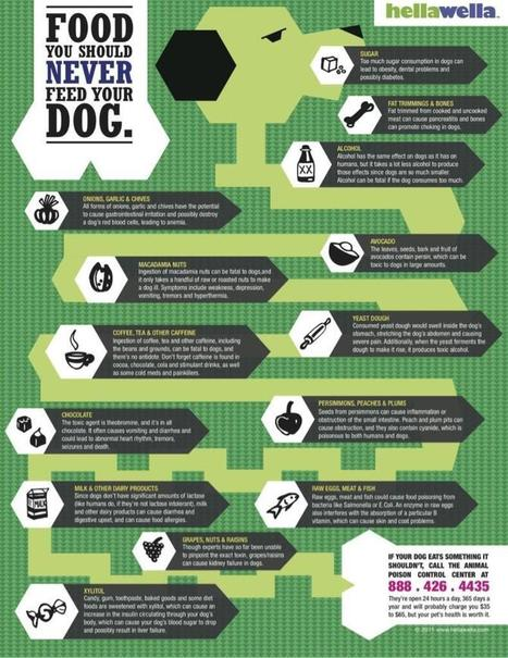 Twitter / Bobfeldman12: Foods you should never feed ... | Dog Lovers | Scoop.it