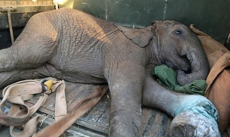 The Indiscriminate Wildlife Killer | GarryRogers Biosphere News | Scoop.it