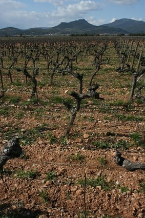 French land study points to widening price gap between appellations | Vitabella Wine Daily Gossip | Scoop.it