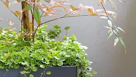 Out of the box: With elaborate layers of plants, container gardens gain ... - Allentown Morning Call | Gardening | Scoop.it