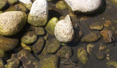 In pursuit of Romanian frogs (Bombina)   AJC's Frogroom   Scoop.it