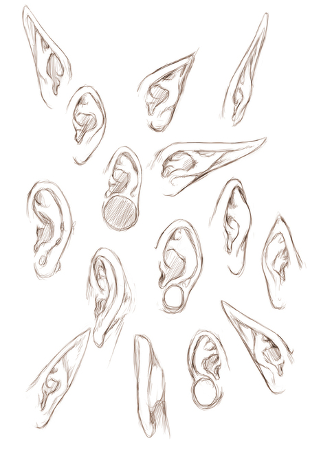 ear Drawing In Drawing References And Resources