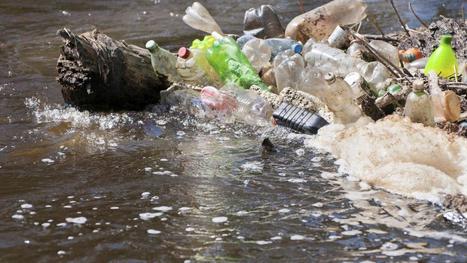 'Levend' apparaatje kan watervervuiling meten   School   Scoop.it