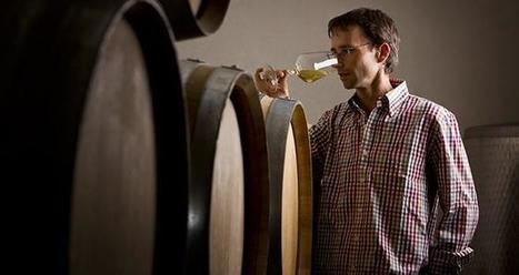 Une levure non-Saccharomyces d'intérêt | Winemak-in | Scoop.it
