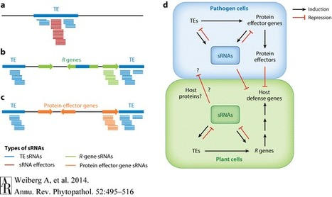 Small RNAs: A New Paradigm in Plant-Microbe Interactions - | MycorWeb Plant-Microbe Interactions | Scoop.it