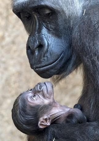 Mamá gorila | Agua | Scoop.it
