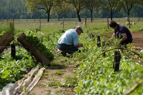 INRA - La transition écologique de l'agriculture, l'affaire de tous ? | veille Lycée La touche Agriculture et Santé | Scoop.it