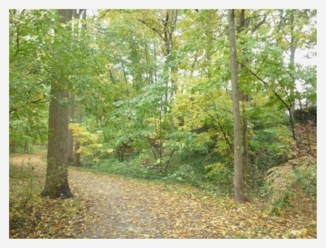 Restoration of Deciduous Forests | Learn Science at Scitable | Temperate forest | Scoop.it