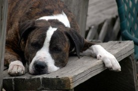 Dangers, Symptoms and Treatment of Giardia in Dogs | Natural Pet Care | Scoop.it