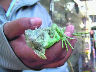 Venta ilegal de fauna propicia su maltrato :: El Informador | Agua | Scoop.it