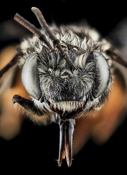 Stunning Macro Photos of Bees | Foto's | Scoop.it