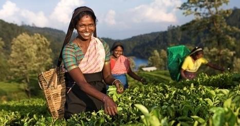 Le Sri Lanka : l'île aux sourires | Actu & Voyage au Sri Lanka | Scoop.it