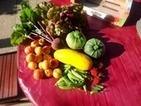 Un potager bio pour cultiver son plaisir de vivre sainement | Potager Bio & PermaCulture | Scoop.it