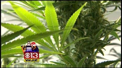Law Enforcement Agencies Review New Marijuana Policies - CBS Local | The legalization of marijuana | Scoop.it
