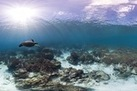 Explore the World's Coral Reefs with Google Street View - LiveScience.com | Grade 10 | Scoop.it