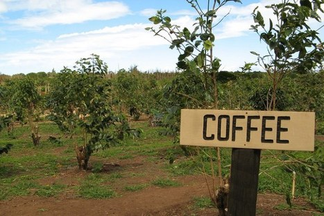 Coffee in Hawaii and the other island       http://www.thedailymeal.com/guide-worlds-coffee-regions | Chris' Regional Geography | Scoop.it