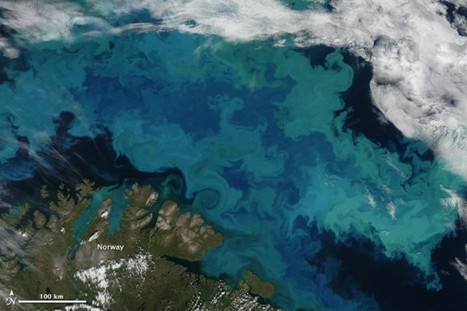 Explosive Phytoplankton Bloom Seen From Space | Planets, Stars, rockets and Space | Scoop.it