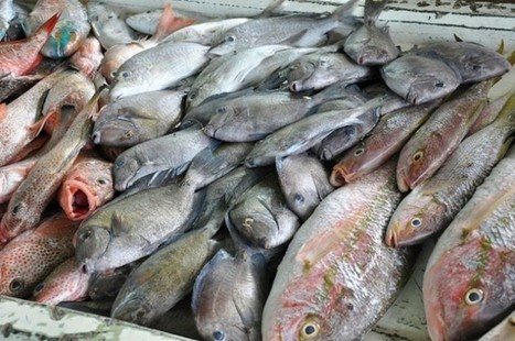 CARIBBEAN: Regional fisheries bodies sign agreement to improve coordination for sustainable fisheries   Aquaculture Directory   Scoop.it