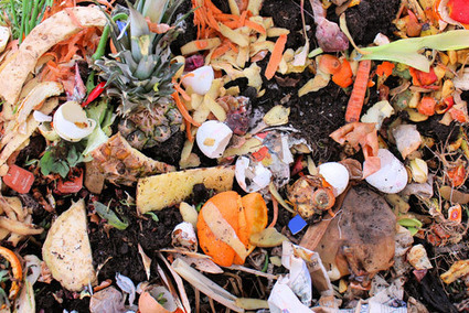 4 Ways to End Food Waste - Modern Farmer   Sustain Our Earth   Scoop.it